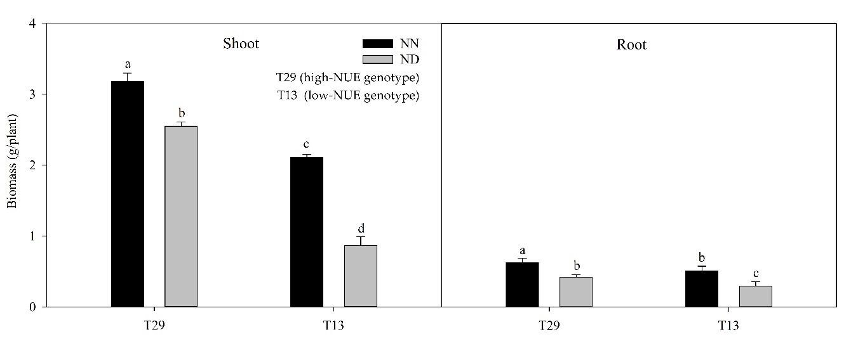 氮不足时苎麻基因型的植物生长性能