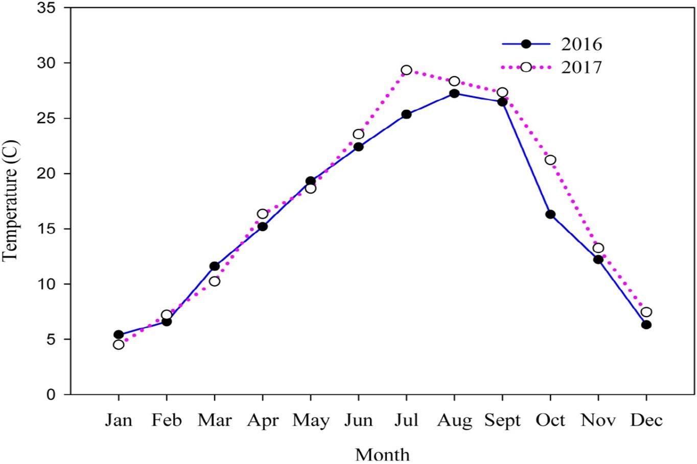 测定地上生物量超过70天的残留氮磷释放的衰老实验示意图