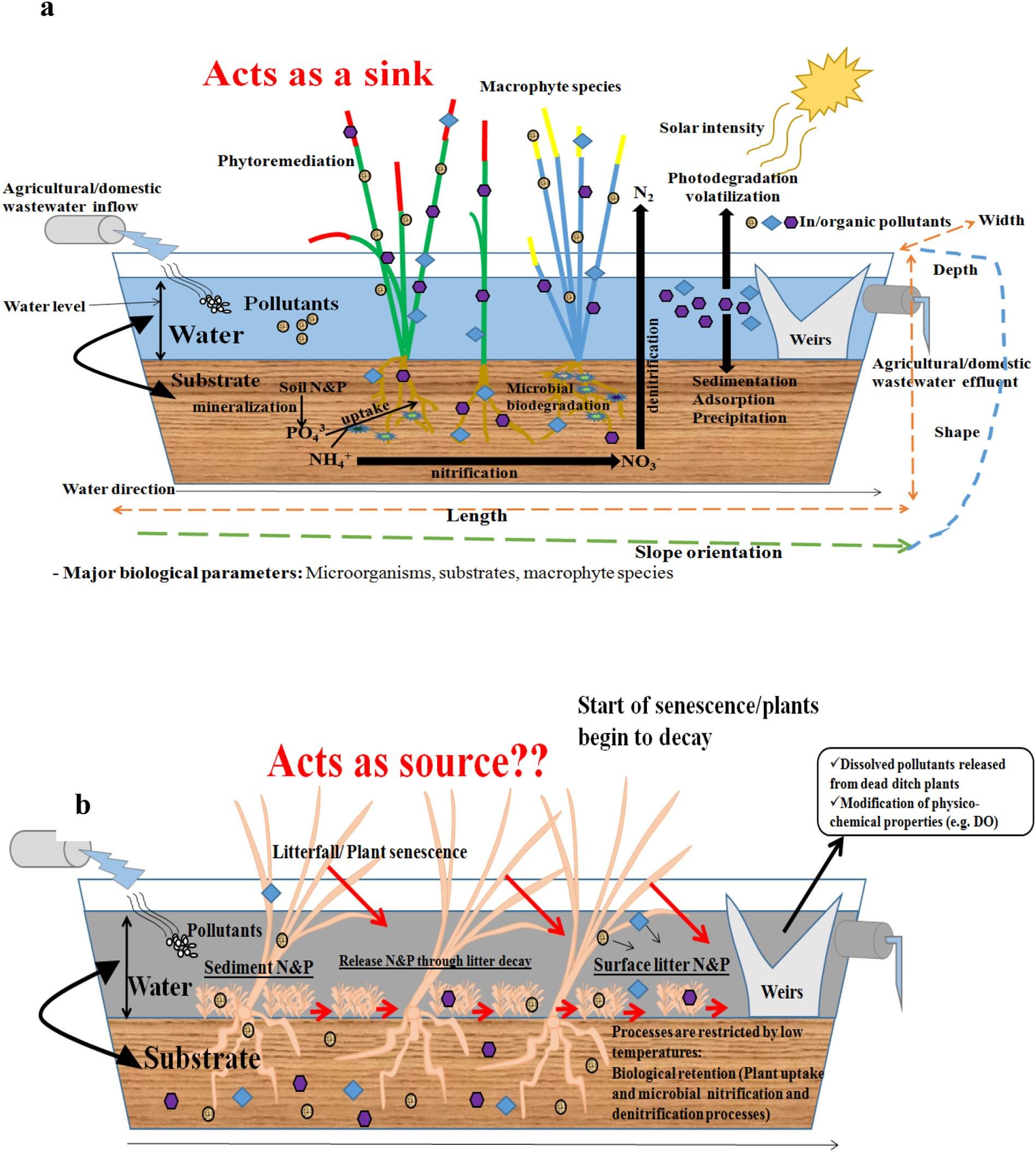 植物化农业排水沟在暖期减少养分过程概念图
